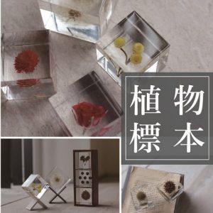 ソラキューブPOPUP STORE期間限定オープン!!6/19(土)~7/18(日) 昨年好評だった、sola cube(ソラキューブ)のPOP UPを今年も開催致します!! sola cubeは「植物の美しいかたち」をコンセプトに、植物の花、実、種を立方体のアクリルキューブに閉じ込めたアート。日本の職人の手と技により作られており、アクリルへの封入、加工、磨きまで一つ一つ手作業で行われています。 ぜひこの機会にご来店下さい。